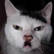 Cat de Miami